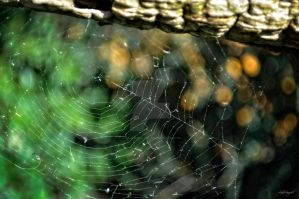 Spider Lace by lisajlangrish