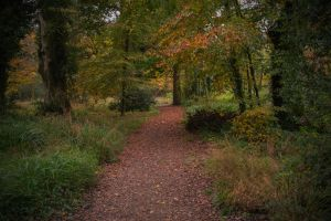 Forest Path Stock (November 2015).. by WelshDragonStockNArt
