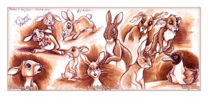 Watership Down by Kat-Nicholson
