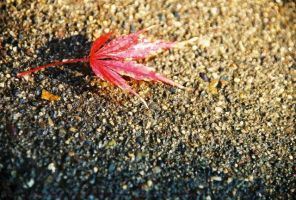red asphalt by champaignful
