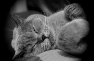 kitty cat takes a nap. by mysteriousMJ