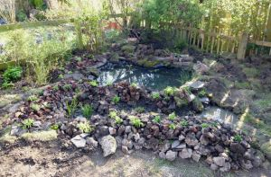 Wildlife Pond, Rockery and Marginal Area by Lost-in-the-day