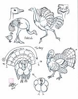 Draw Ostrich and Turkey by Diana-Huang