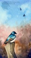 Tree Swallow  Watercolor Study by Nambroth