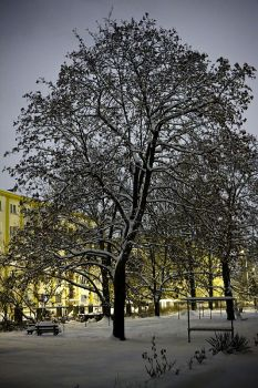 Tree in winter by Chevees