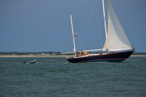 FortMaconBeach Sailboat by MrsChibi