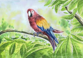 Parrot by chuaenghan