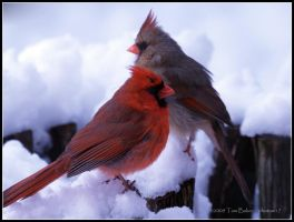 cardinals formal by photom17
