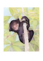 Sun Bear Cub by mrana