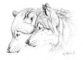Wolves by Ferluner