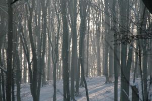 Winter forest 3 by boreasz