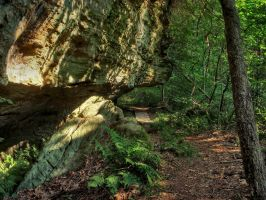 Shady Trail 03 by sixwings