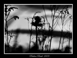 Black and white nature by Lamia86