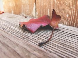 Seasons change, and so people by EmilyLPhotography