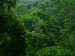 Rainforest Scenery by StormStrikeElectric