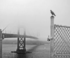 Golden Gate in bw by azimos