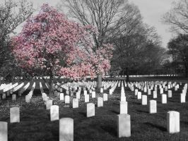 Blossoms Amongst the Graves by Frogg3862