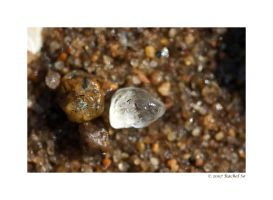 Sea Crystal by butterfly36rs