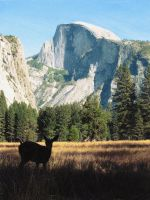 Half Dome and Deer by moonaniteone