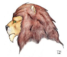 Lion Profile by Night-Forager