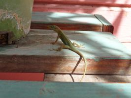 Green Anole by Spinky1