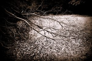 dancing branches ll by Afriell