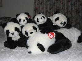 PANDAS by Slifer