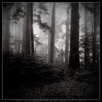 Early Morning Fog in Forest by dlacko