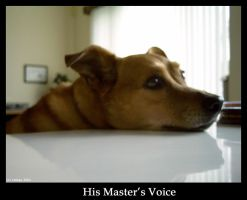 CF IV -  His Masters Voice by cataya