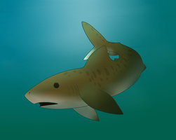 Tiger Shark by CollectionOfWhiskers