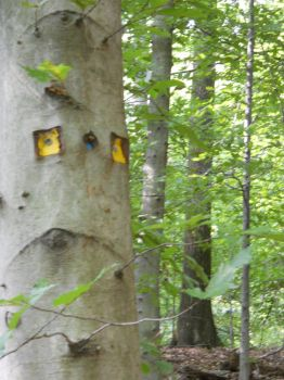Tree Face. by Sunflower9grow