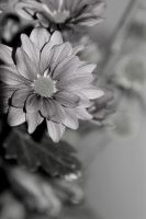 IMG_2659 by sophathdsn