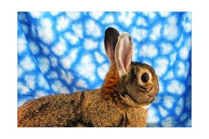 Client's Pet Rabbit by ElaineSelene