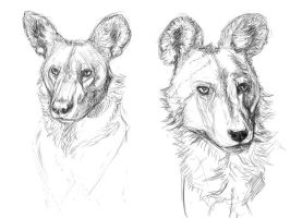 African wild dogs WIP by Midnight-Sun-Art