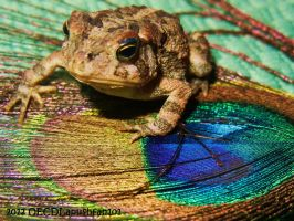 Colorful Appearance by OECDLapushfan101