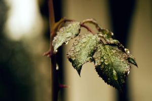 Raindrops by isabelle-19