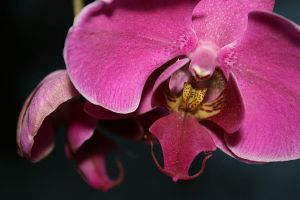 Orchid 1 by Golden-Plated