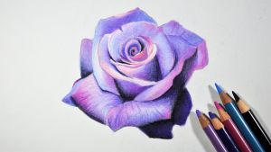 Lavender Rose -- Prismacolor pencils by f-a-d-i-l