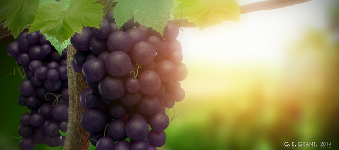 Grapes by phaceless2