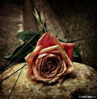 The Truth Beneath The Rose by Gothicemily