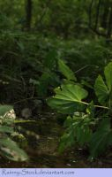 creek and plant- STOCK by Rainny-Stock