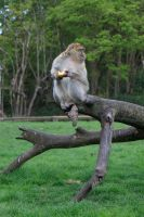 Monkey-5 by Random-Acts-Stock