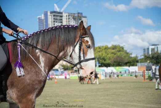 RQS Clydesdale #117 by AmoretteRose