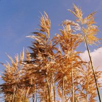 Pampas Autumn by EarthHart