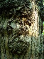 Face In The Tree by Druidstone