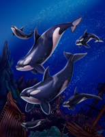 Orcas by DragonosX