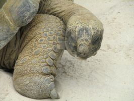 Tortue by atsumimag
