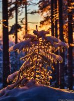 Winter Forest VII by Puuronen
