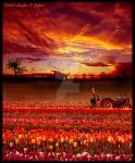 Sunset in the Tulip Field by Jenna-Rose