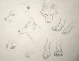 Wolf Sketches by Yumi-San1688
